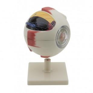 Model ljudskog oka - 6 delova uvećan 5 puta